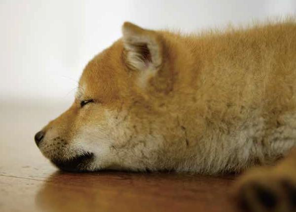 【愛犬家住宅】9/20~9/26は動物愛護週間です!